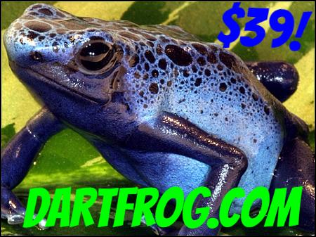 low priced a047e 78c74 Frog - Dendrobates azureus - (Froglet)
